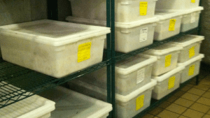 New food containers organization system reduces food waste and increases efficiency.